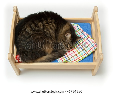 Cat, curled up asleep in a children's toy crib - stock photo