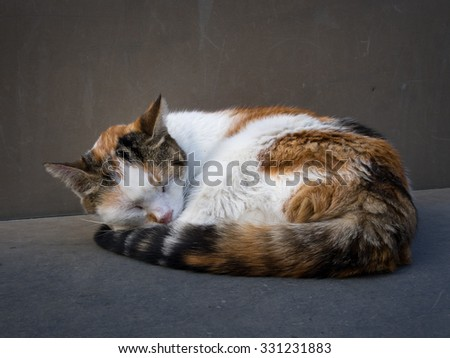 Cat curled up asleep on stone bench. Ginger white and tabby. - stock photo