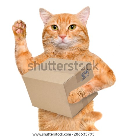 Cat delivery post box - stock photo