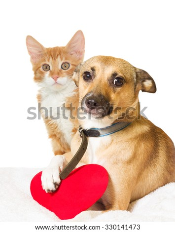 cat,  dog and heart on white background - stock photo