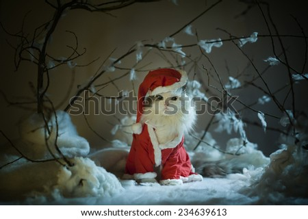 cat dressed as Santa Claus in the winter forest - stock photo