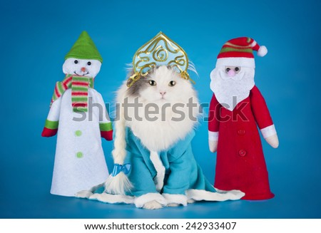 cat dressed as Snow Maiden on a blue background isolated - stock photo