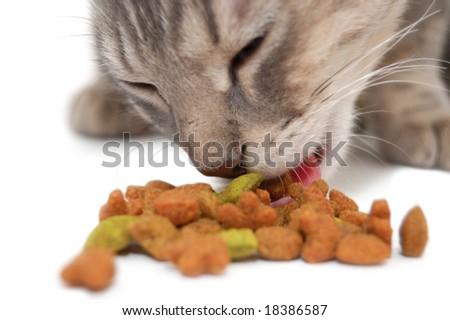 Cat eating dry cat food - stock photo