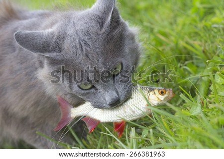Cat eats fish  - stock photo