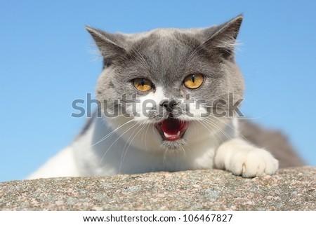 cat, emotions - stock photo