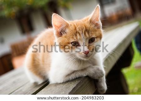 Cat enjoy country life - vintage stock photo - stock photo