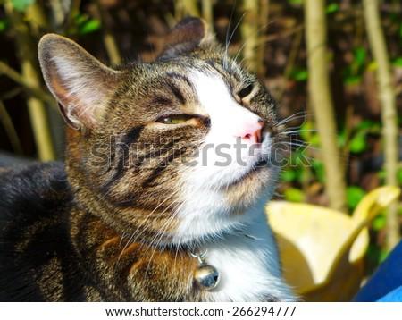 Cat enjoy the sun - stock photo