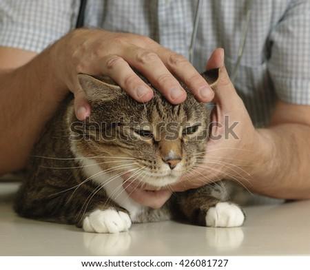 Cat examined by veterinarian  - stock photo
