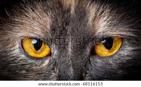Cat eyes. - stock photo
