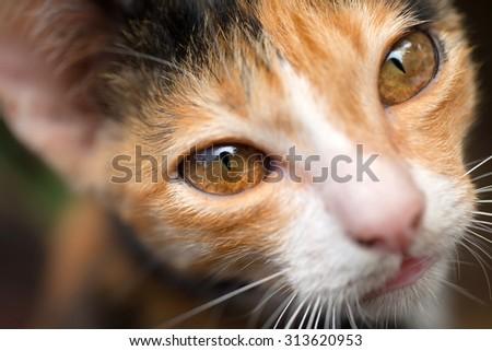 cat eyes closeup - stock photo