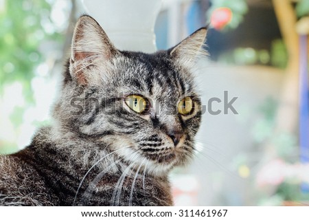 Cat face - stock photo