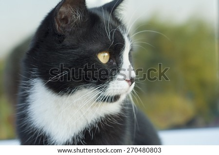 cat face black and white close-up - stock photo