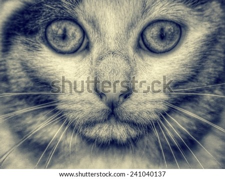 cat face, vintage style - stock photo
