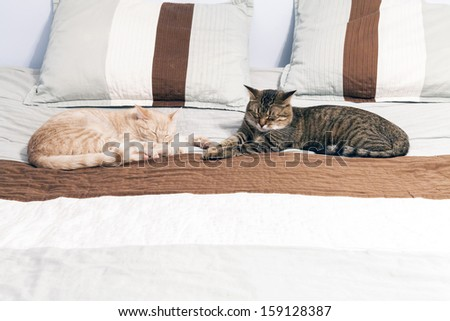 Cat Friends in Bedroom  - stock photo