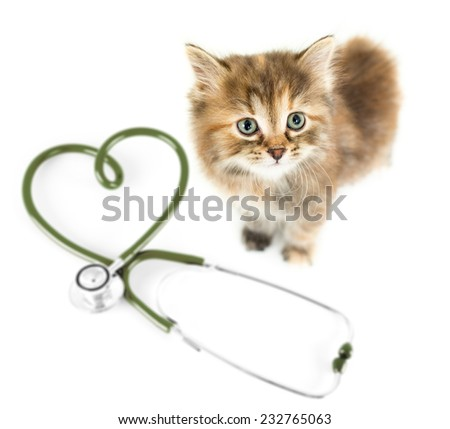 Cat from above on white. Veterinary for pets concept. - stock photo