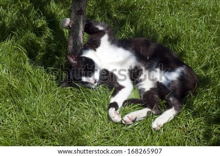 Cat funny sleeping under the tree - stock photo