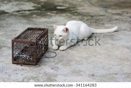 cat gaze rat in Cage Rat Trap - stock photo