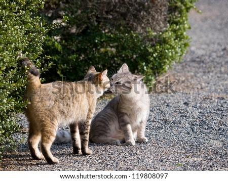 Cat greeting - stock photo
