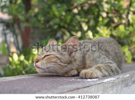 Cat, grey cat sleeping with his tongue out. and colorful blur background.(select focus front Cat) - stock photo
