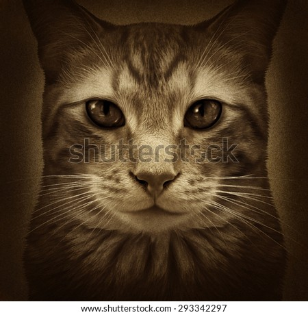 Cat grunge portrait as a close up of a generic furry domestic feline pet on a textured background as a kitty symbol for veterinary and grooming related services. - stock photo