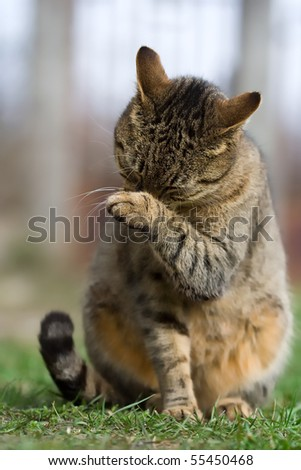 cat has a wash - stock photo