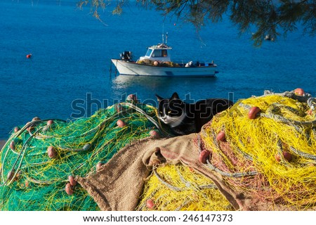 Cat having a rest on winter sunny day on fishing net in the island of Mykonos. Greece. - stock photo