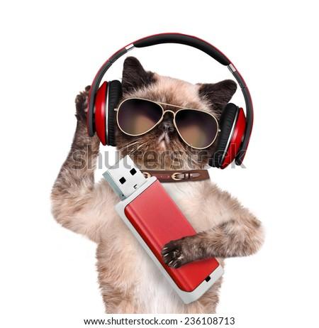Cat headphones. - stock photo