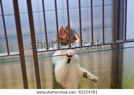 cat held in cage for experiments, looking sadly to be freed - stock photo