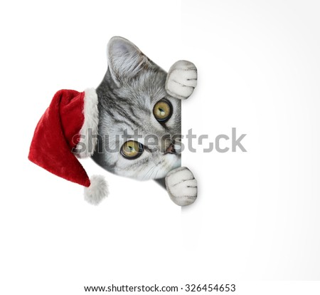 cat hiding behind poster - stock photo