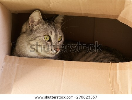 Cat hiding in paper box, curious cat in the box, playing cat, cat playing at home, serious cat, cat inside, photo - stock photo