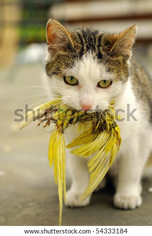 Cat hunted a budgie - stock photo