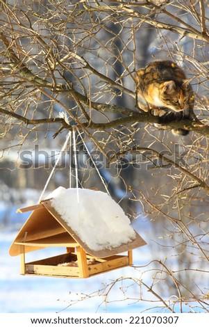 cat hunting a bird near bird feeder - stock photo
