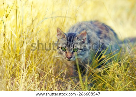 Cat hunting in the tall grass - stock photo
