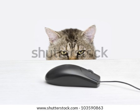 Cat hunts a computer mouse lying on the table - stock photo
