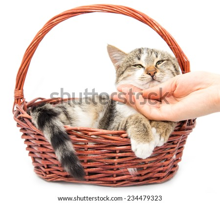 cat in a basket on a white background - stock photo
