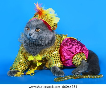 Cat in a carnival costume. - stock photo