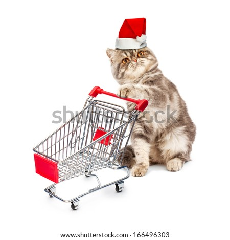 Cat in a Christmas cap with a cart on white background - stock photo