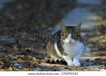 Cat in a park  cute domestic cat female sits wary on the pathway in autumn park - stock photo