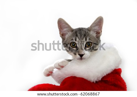 Cat in a red and white Christmas stocking - stock photo