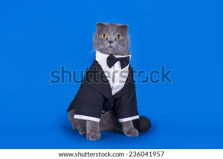 cat in a suit isolated on a blue background - stock photo