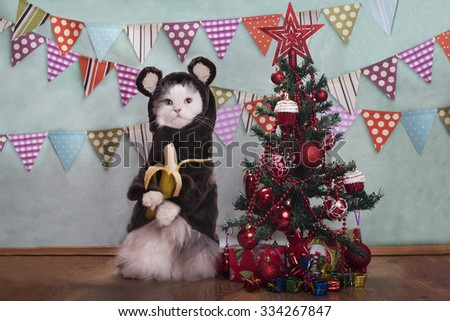 Cat in a suit monkey eating a banana at the Christmas tree - stock photo