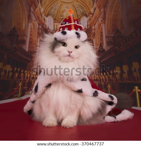 Cat in a suit of the king in his own castle - stock photo