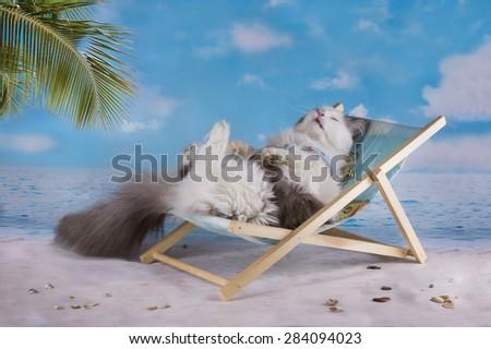 Cat in a swimsuit sunbathe on the beach - stock photo