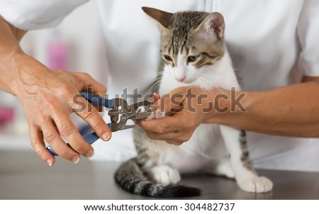 Cat in a veterinary clinic hairdresser cutting nails - stock photo