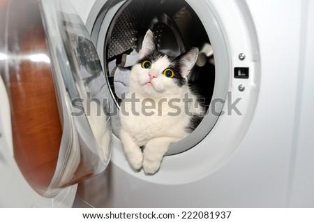 Cat in a washing machine - stock photo