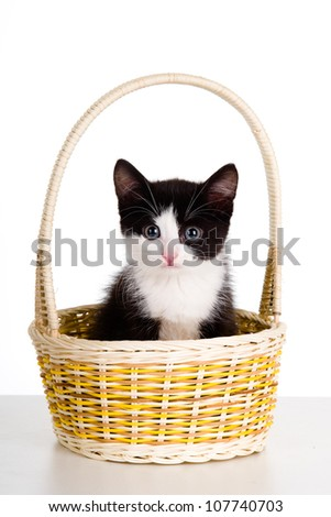 cat in basket. isolated on white background - stock photo
