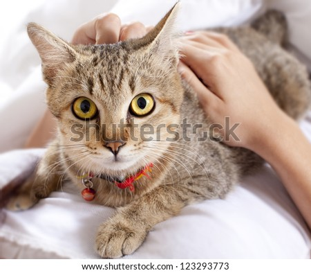 Cat in bed with hands - stock photo