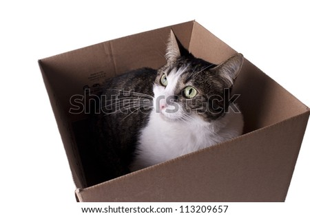 cat in box - stock photo