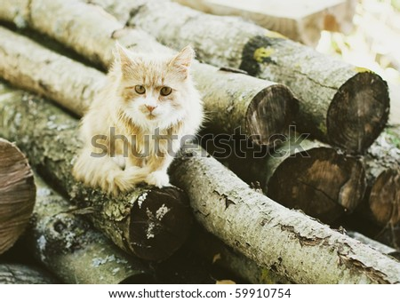 cat in countryside - stock photo