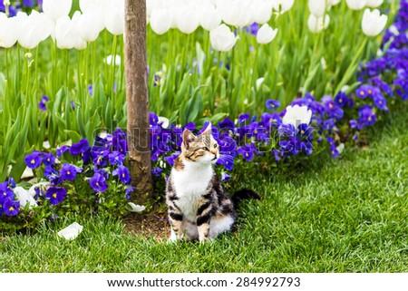 cat in flowers - stock photo